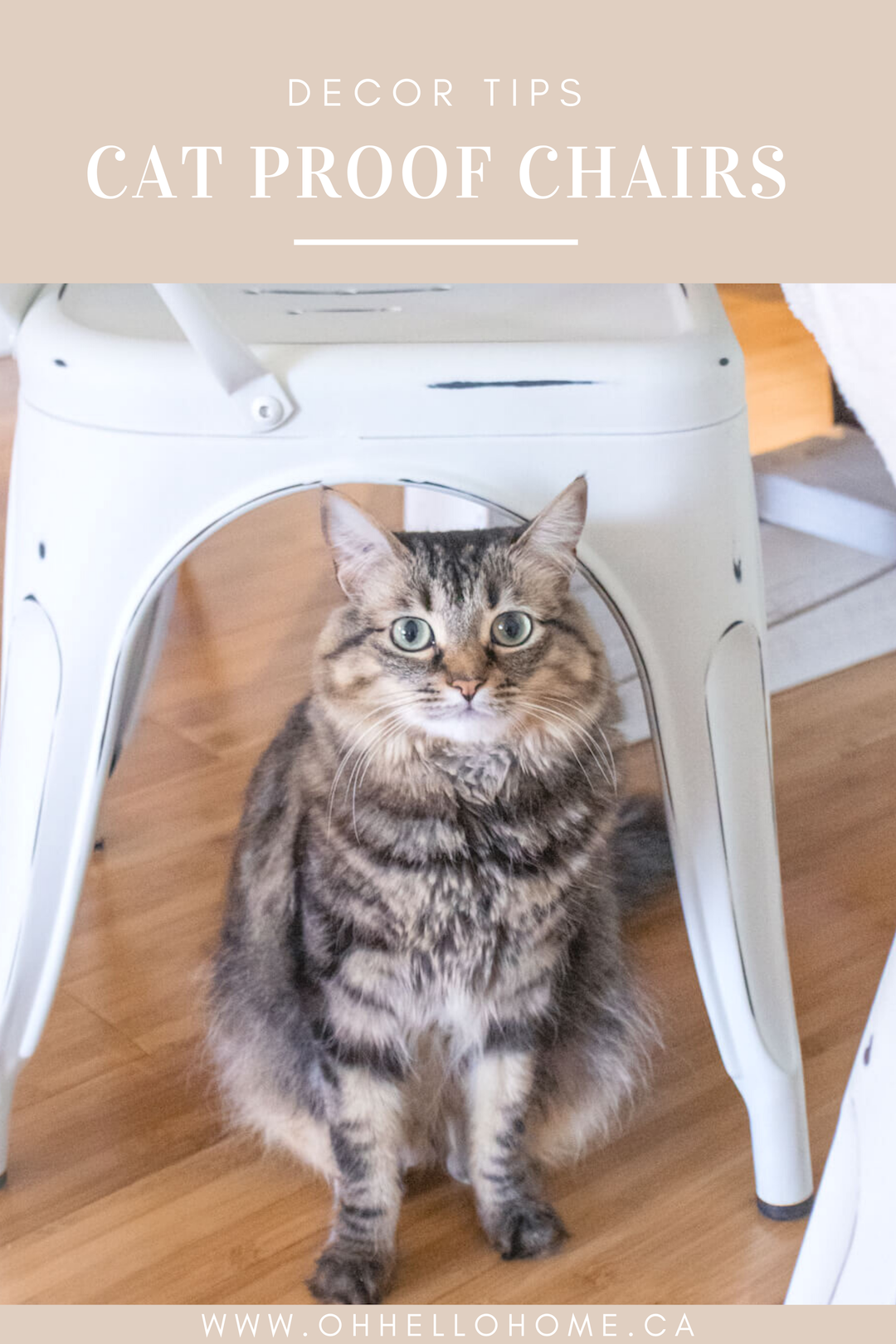 5 Cat Friendly Dining Room Chairs